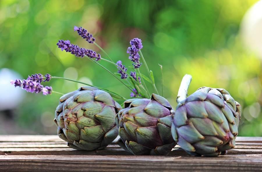 Dieta de la Alcachofa, la alcachofa es un seguro de salud, peligros dieta de la alcachofa, es segura la dieta de la alcachofa, en qué consiste la dieta de la alcachofa, cápsulas de alcachofa, ampollas de alcachofa,