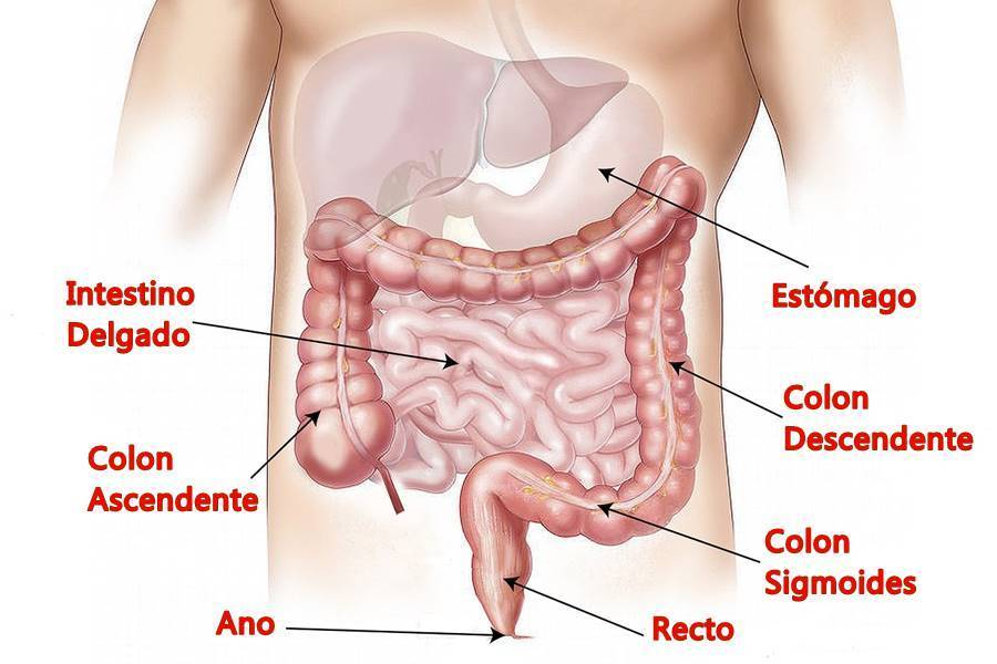 Síntomas del Síndrome del Intestino Irritable, síntomas síndrome intestino irritable, diagnóstico del síndrome del intestino irritable, diagnóstico síndrome intestino irritable, Definición de Síndrome del Intestino Irritable, Síntomas del Síndrome del Intestino Irritable No Digestivos, síndrome del intestino funcional, síntomas del síndrome del intestino, diagnóstico del síndrome del intestino,
