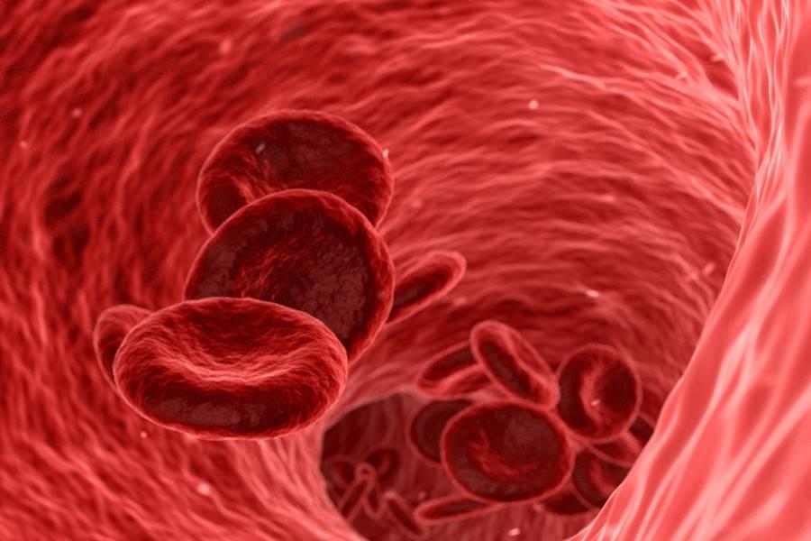 ¿Por Qué Es Importante El Hierro En La Sangre?