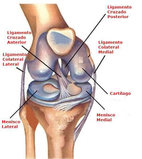 Prevención del Esguince de rodilla grado 2, Tratamiento del Esguince de Rodilla Grado 2, ¿Qué es un Esguince de Rodilla?, Causas del esguince de rodilla grado 2, Grados del esguince de rodilla, Síntomas del esguince de rodilla grado 2,Diagnóstico del esguince de rodilla grado 2, Tratamiento del esguince de rodilla grado 2, ¿Cuáles son los Factores de riesgo del esguince de rodilla grado 2?, ¿Cómo prevenir el esguince de rodilla grado 2?,